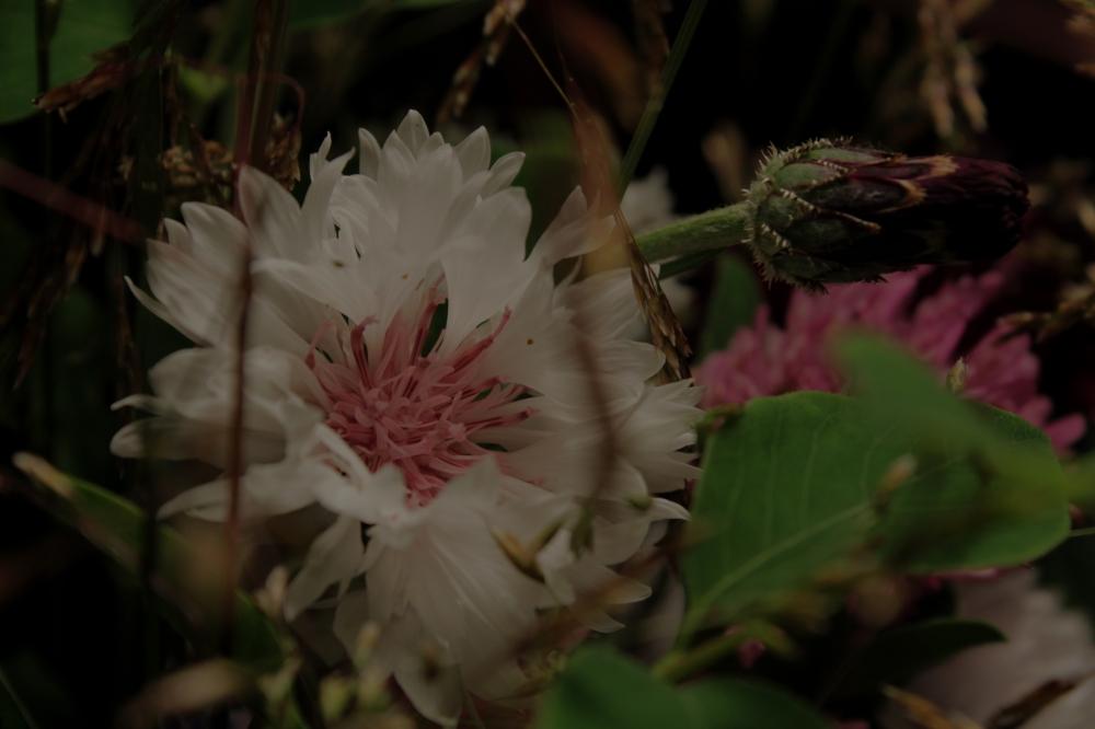 blommor11